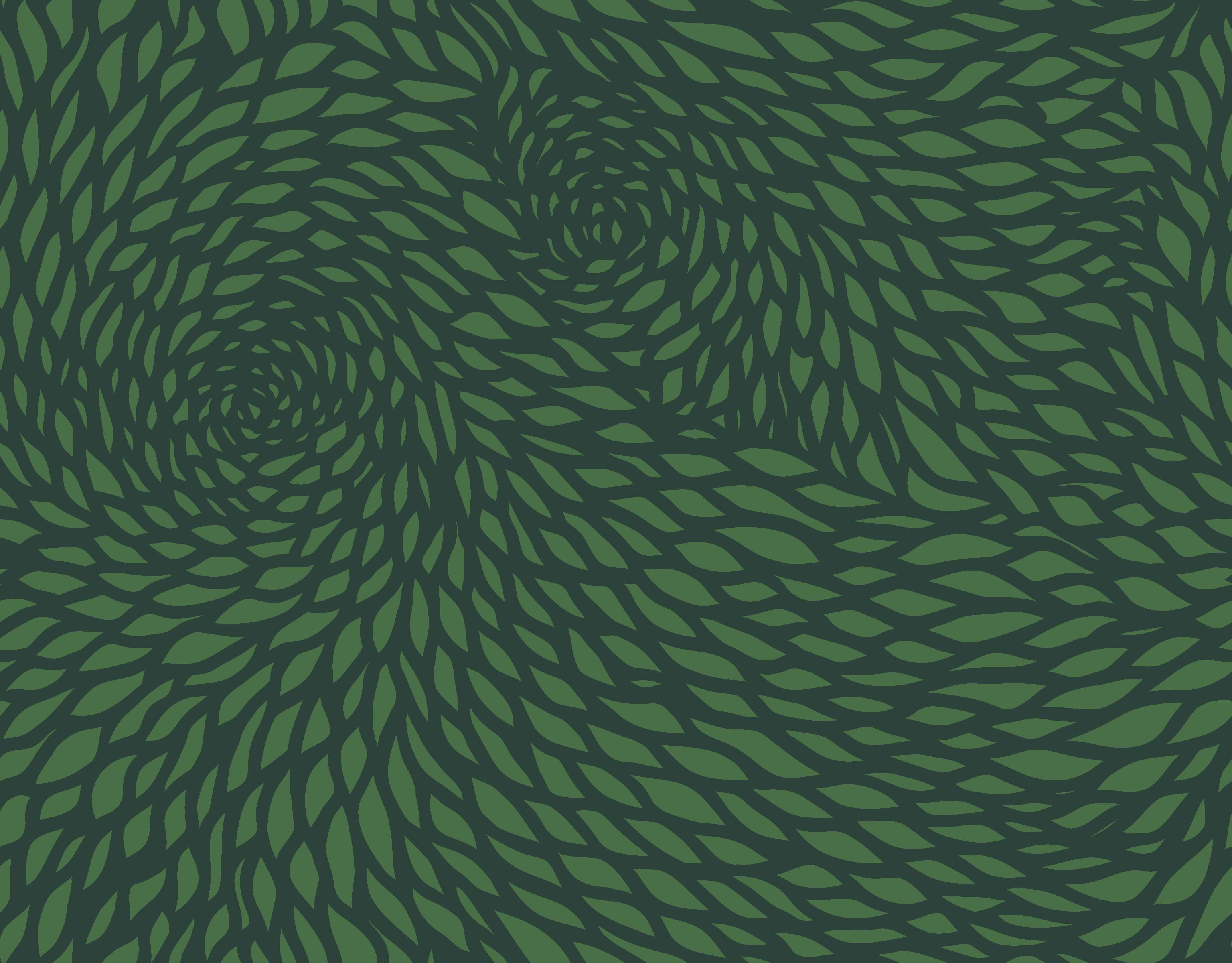 chrysanthemum  green